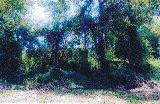 Lot Kediaman di Taman Seroja pejabat-tanah-kedah